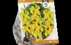 gladiolus-marvinka-sp-per-7